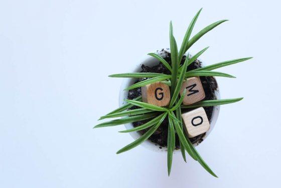 gmo-word-dice-inside-plant-2021-08-31-12-29-30-utc